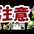 【ポケモンGO】新バグポケモン!?第5世代一気に実装!?明日の注意点【コミュニティデイ準備】